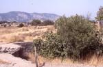 World War II gun emplacement on Ay. Dimitirios Ridge