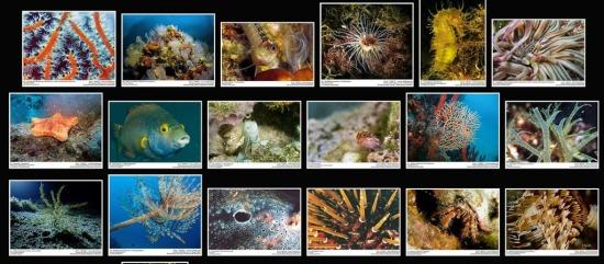 Corinthian-Gulf_Marine-Life.jpg
