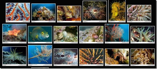 Corinthian Gulf_Marine Life